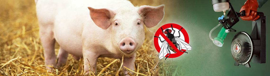 Insect control in pig pens, animal health