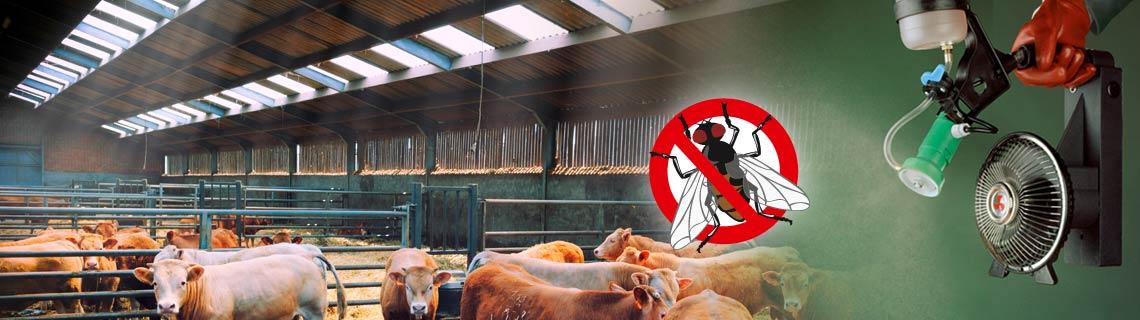 Stallhygiëne in de rundveehoudeerij, diergezondheid